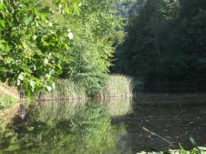 Lacul cu nuferi - Dognecea
