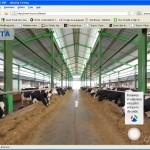 Cea mai modernă fermă de vaci din Romania - Adunații Copăceni