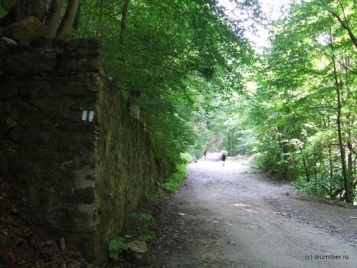 Drumul spre cascada Lotrișor