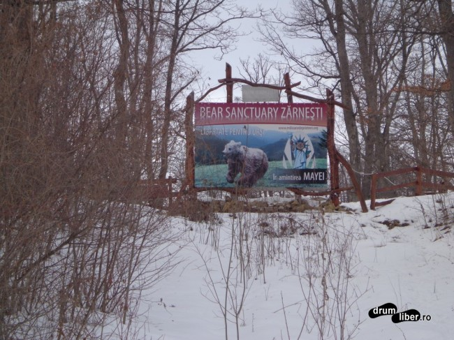 În amintirea Mayei - Libertate pentru urși - Rezervația de Urși de la Zărnești