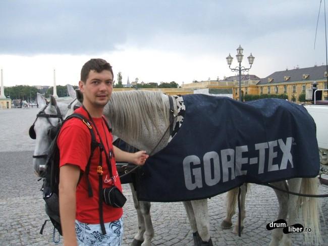 La Schonbrunn și caii au pelerină cu Gore-Tex :)