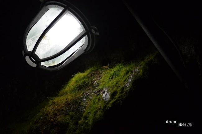 Viață la lumină artificială, în Peștera Ialomiței