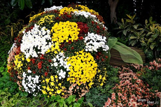 Un buchet imens de crizanteme pentru toate doamnele și domnișoarele care citesc drumliber.ro