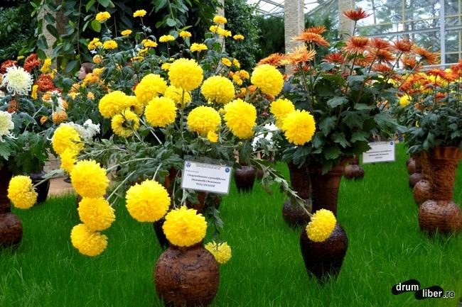 Paradisul florilor