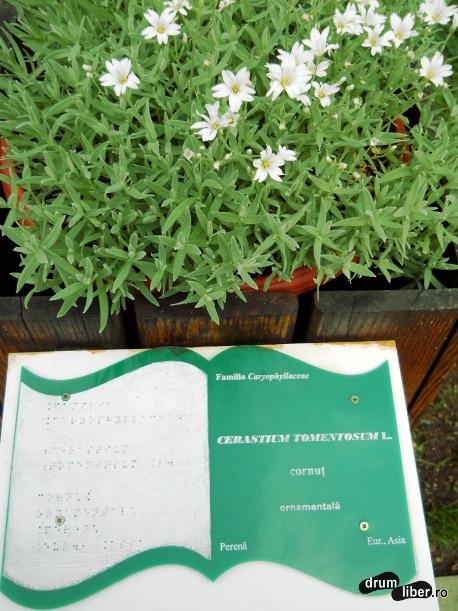 Specia Cornuț, informații referitoare la specia apar și în alfabetul Braille.