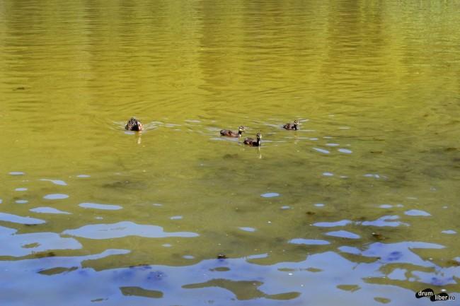Bobocii de pe lac