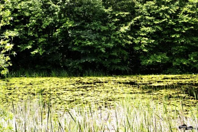 Lacul încărcat cu flori de nufăr
