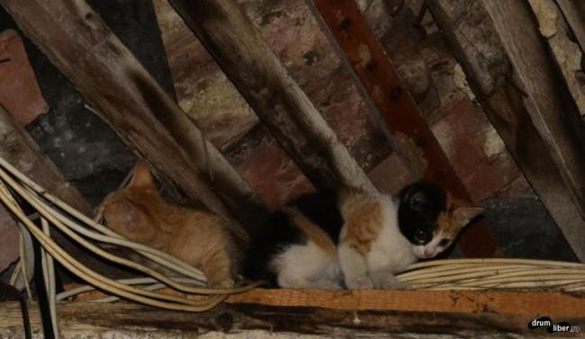Pisicile în căutarea slăninei