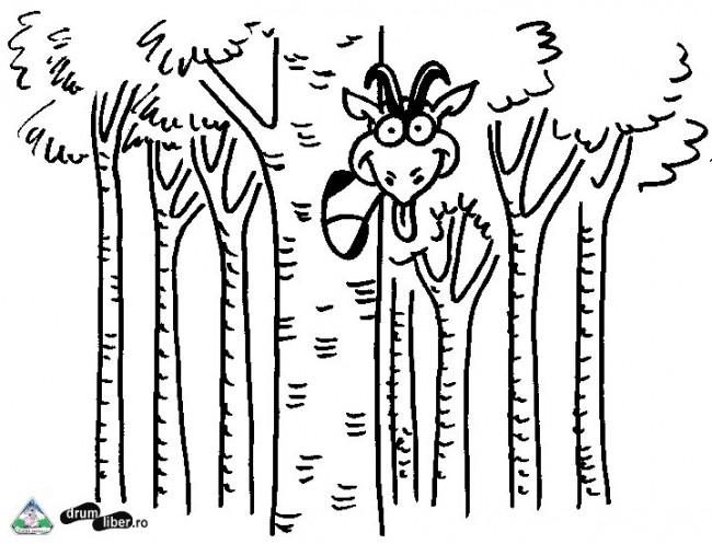 Copacii trebuie să rămână în pădure
