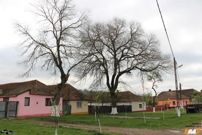Case cu duzi bătrâni în față