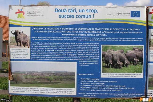 Programul de reabilitare a biotopelor de sărătură și de apă...