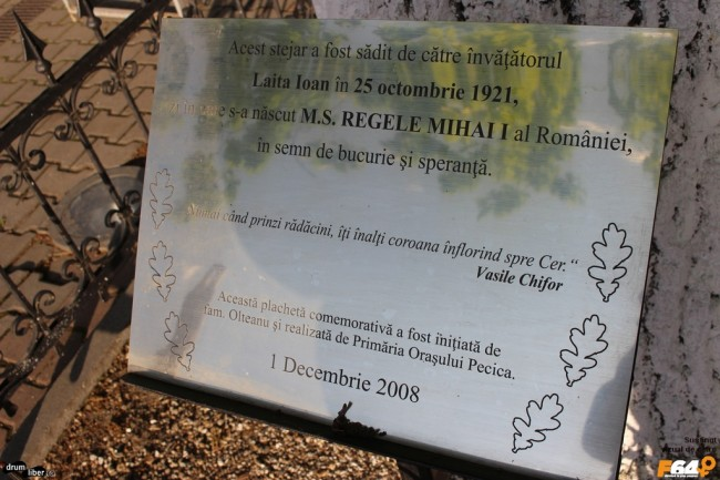 Stejar plantat la nașterea Regelui Mihai