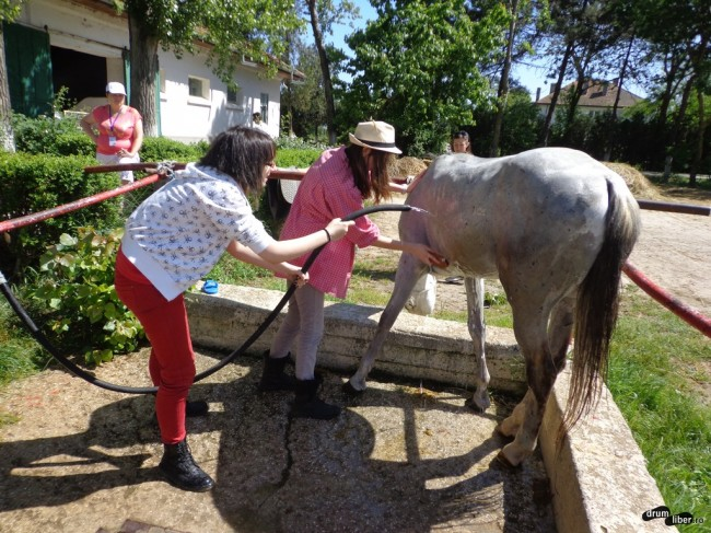 Spălarea un cal pur sânge arab la Mangalia