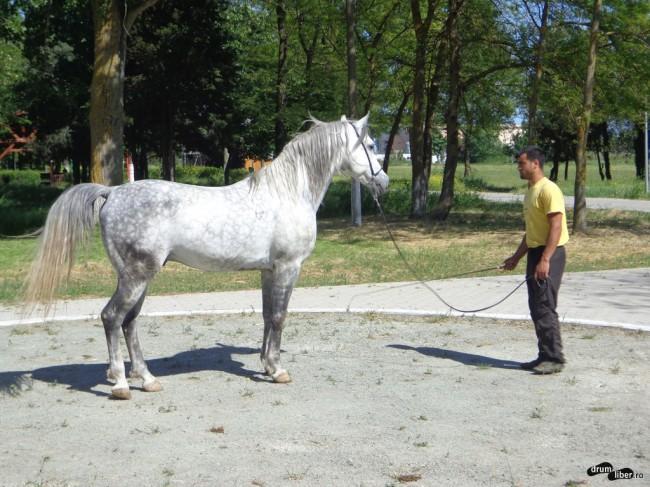 Un cal a fost scos pentru grup