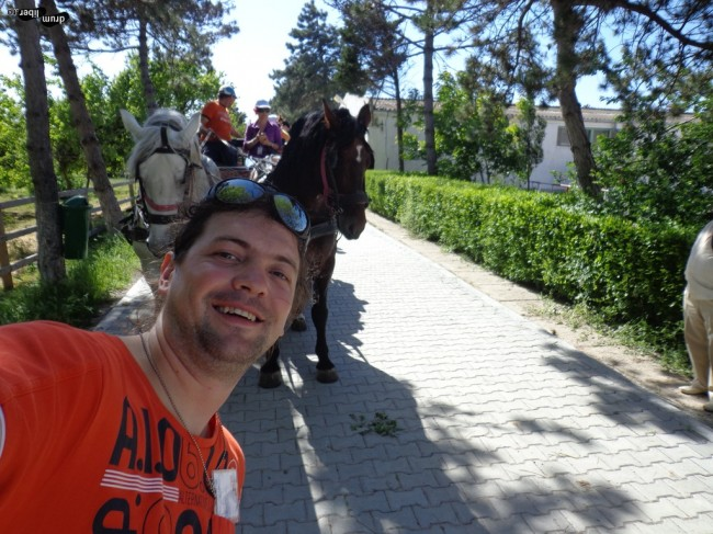 Ne-am plimbat cu trăsura la Herghelia Mangalia