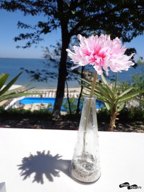 Cea mai fotografiată floare de pe litoral, la Hotel Steaua de Mare