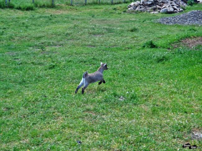 Viitoarea fermă a animalelor, lângă Mangalia