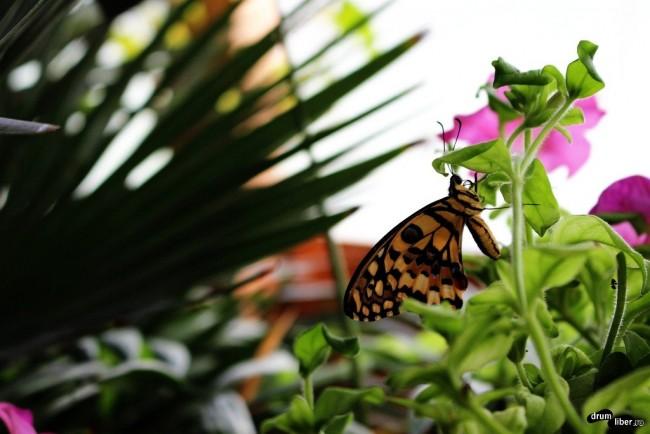 Un frumos fluture