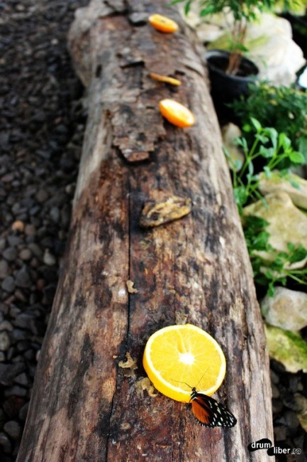 Unii se hrănesc cu zeamă de portocală