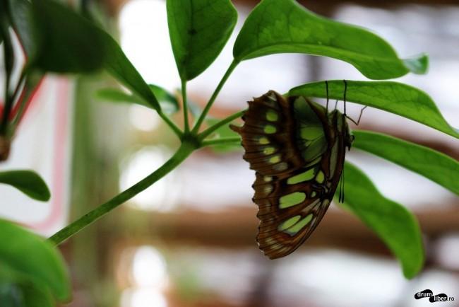 Fluturi din Casa Fluturilor