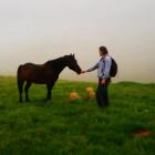 Întâlnind caii de la munte